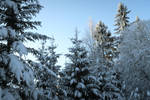 Moisakula winter forest 691 by MASYON