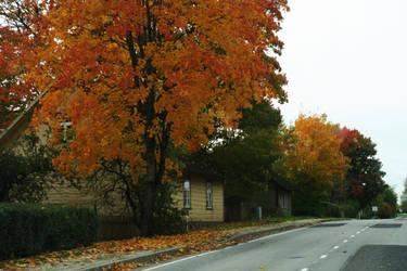 Autumn 503 by MASYON