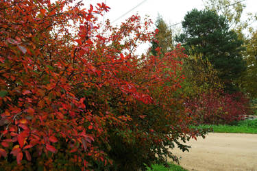 Autumn 505 by MASYON