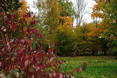 Autumn 514 by MASYON