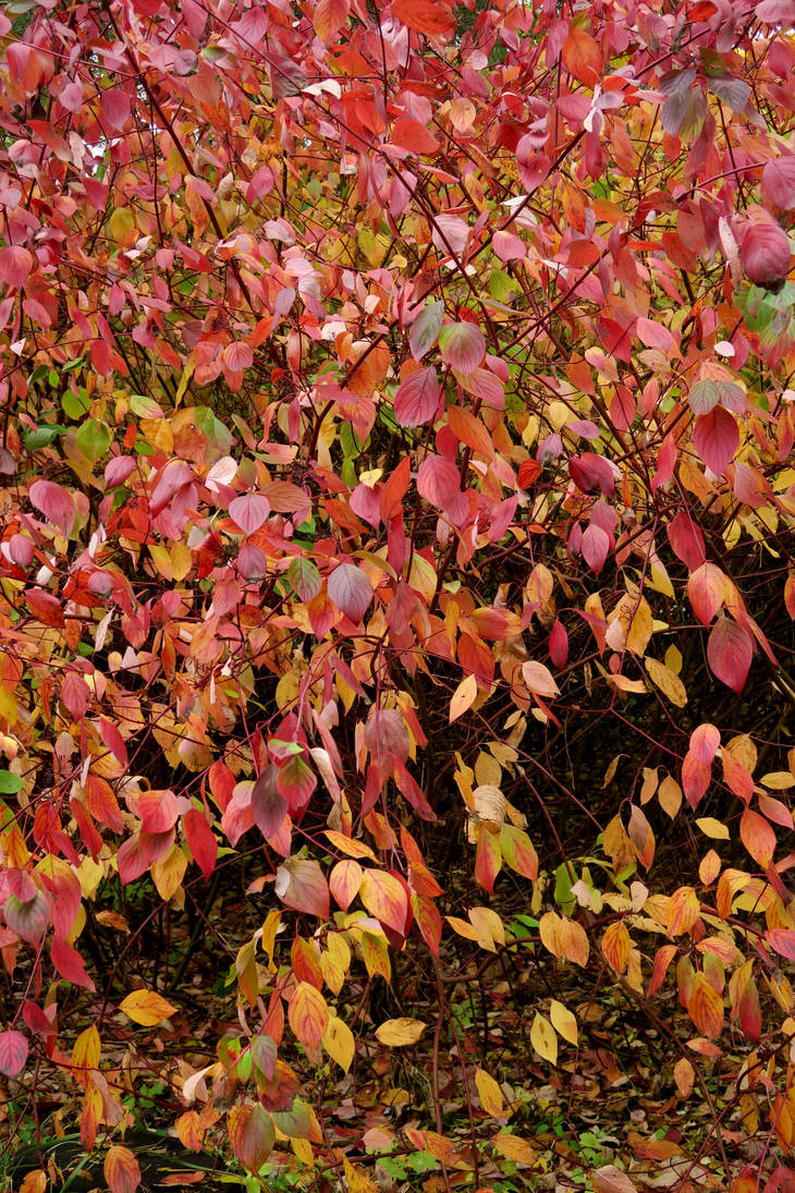 Autumn 524 by MASYON