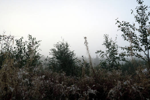 Autum fog 107 by MASYON