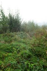 Autum fog 115 by MASYON