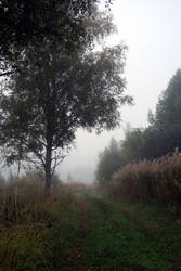 Autum fog 138 by MASYON