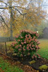 Autumn fog 250 by MASYON