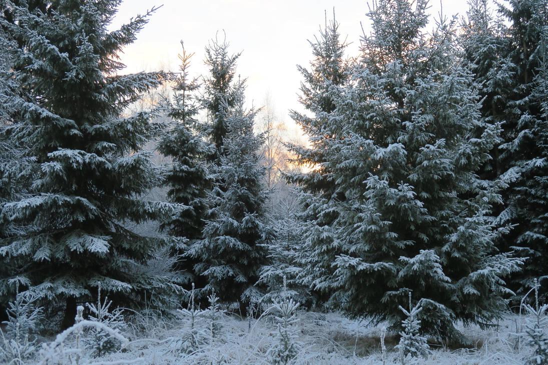 Snow 116 by MASYON
