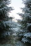 Snow 149 by MASYON