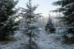 Snow 151 by MASYON