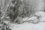Winter 178 by MASYON