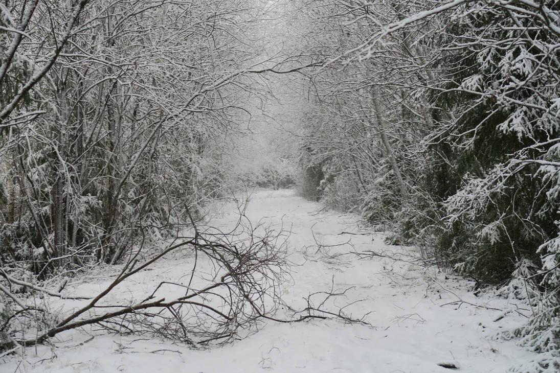 Winter 179 by MASYON