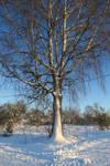 Snow 180 by MASYON