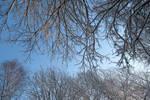 Winter 330 by MASYON