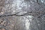 Winter 342 by MASYON
