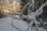 Winter 348 by MASYON