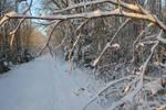 Winter 363 by MASYON