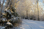 Winter 398 by MASYON