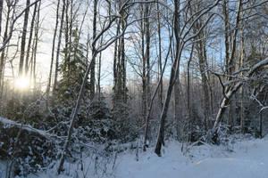 Winter 79 by MASYON