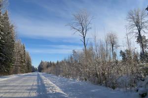 Winter 81 by MASYON