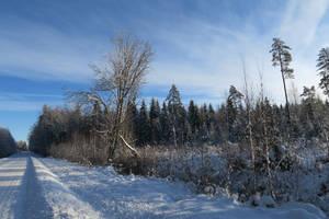 Winter 82 by MASYON