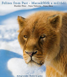 Cave lion - Barlangi oroszln - Panthera leo spel by Peterhutzler