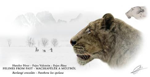 Barlangi oroszln - Panthera leo spelaea v3 by Peterhutzler