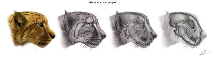 Metailurus major v1 by Peterhutzler