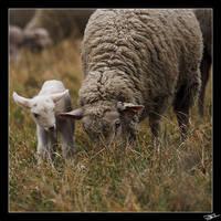Lamb by rami13500