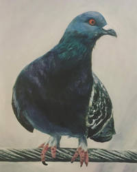 Pigeon Acrylic Painting by sharkdivus