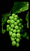 Grapes by Verrr