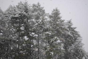 october snow. by amiha