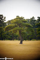 Japanese Imperial Palace Grounds by raveka