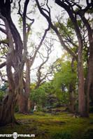 Tree Grove - Hibiya Park by raveka