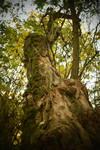 Tree by jajafilm