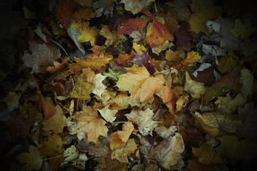 Autumn leaves by jajafilm