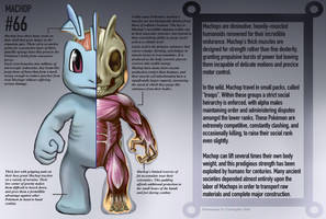 Machop Anatomy- Pokedex Entry by Christopher-Stoll