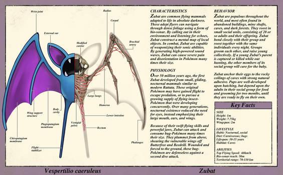 Zubat Anatomy- Pokedex Entry by Christopher-Stoll