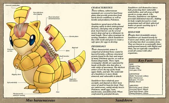 Sandshrew Anatomy- Pokedex Entry by Christopher-Stoll