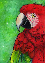 ACEO - Macaw by AnarchyWulf