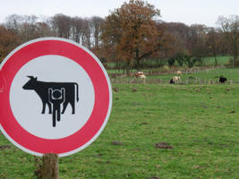 No Cow Tipping! by sykonurse