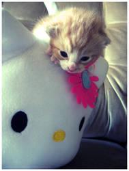 Hello, Kitty by pronouncedyou