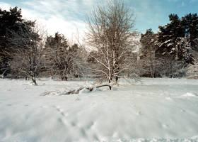 Winter 02 by MacKenzei-stock