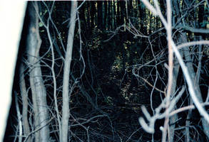 Tree stock 03 by MacKenzei-stock