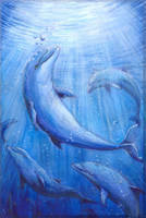 The Dolphin with Star Marks on the Head by Liris-san