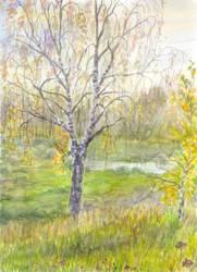A Birch by Liris-san