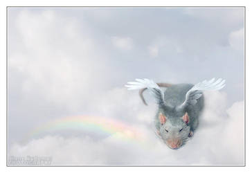 Myrddrinn's Rainbow Bridge by DianePhotos