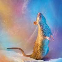 Fenrir 6 - Fancy rat by DianePhotos