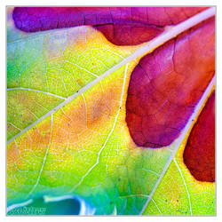 Nature's color palette by DianePhotos