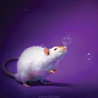 Thjazi 2 - Fancy rat by DianePhotos