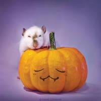 Thorim 2 - Fancy rat by DianePhotos