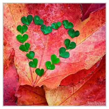 Autumn Love 2 by DianePhotos